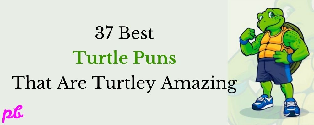 37 Best Turtle Puns That Are Turtley Amazing