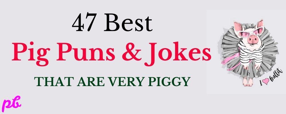 47 Best Pig Puns & Jokes