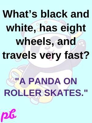 A panda on roller skates