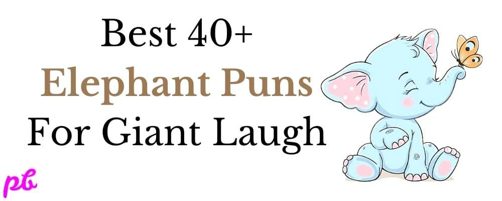 Best Elephant Puns For Giant Laugh