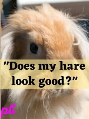Does my hare look good