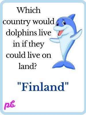 Funny Dolphin Puns
