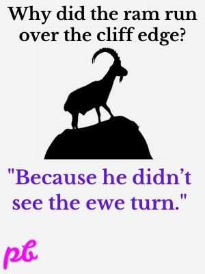Why did the ram run over the cliff edge Because he didn't see the ewe turn.