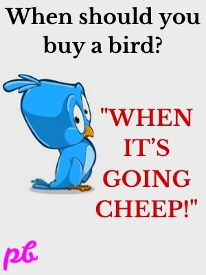 Hilarious Bird Puns & Jokes Question and Answer