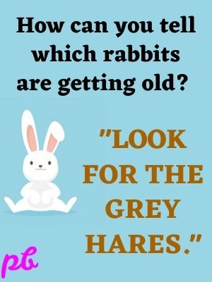 How can you tell which rabbit