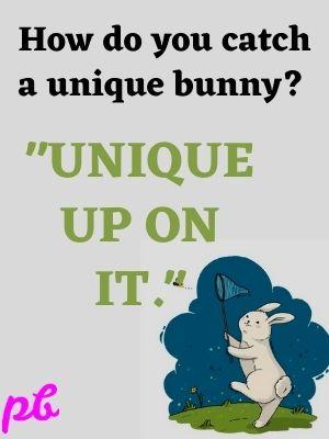 How do you catch a unique bunny  Unique up on it.
