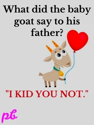 What did the baby goat say to his father?