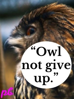 """Owl not give up."""
