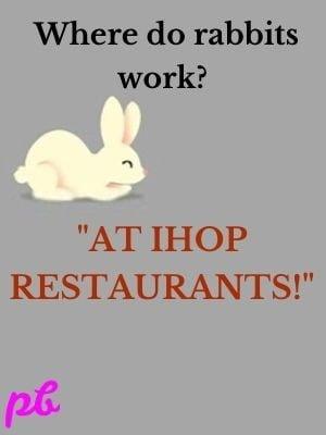 Where do rabbits work
