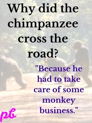 Why did the chimpanzee cross the road