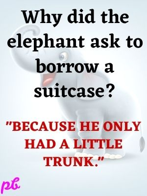 Why did the elephant