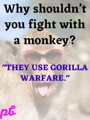 Why shouldn't you fight with a monkey They use gorilla warfare.