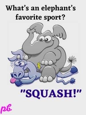 elephants favorite sport