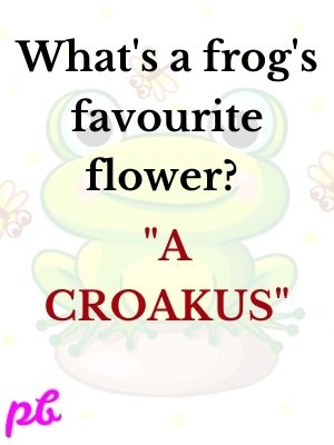 What's a frog's favourite flower