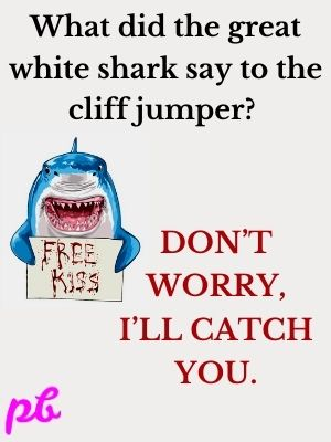 What did the great white shark say to the cliff jumper