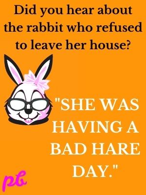 Did you hear about the rabbit who refused to leave her house