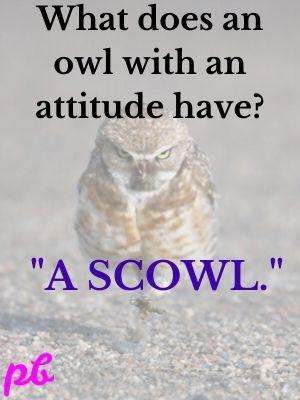 owl with an attitude