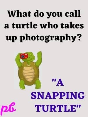turtle who takes up photography
